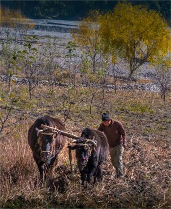 Tukuche-Mustang-NOV-2018-NEPAL-0254