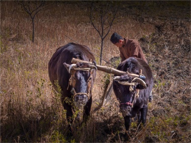 Tukuche-Mustang-NOV-2018-NEPAL-0264