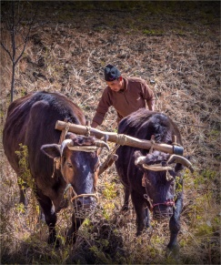 Tukuche-Mustang-NOV-2018-NEPAL-0275