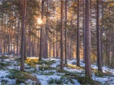 Jokkmokk-Lapland-07032019-SWE039