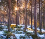 Jokkmokk-Lapland-07032019-SWE0399