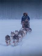 Siberian-Huskies-Lapland-09032019-SWE204