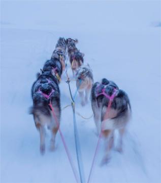Siberian-Huskies-Lapland-09032019-SWE341