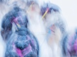 Siberian-Huskies-Lapland-09032019-SWE347