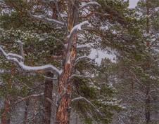 Stora-Sjofalletts-NP-06032019-Snowfall-SWE812