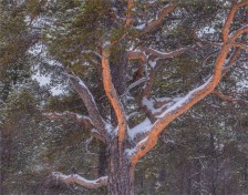Stora-Sjofalletts-NP-06032019-Snowfall-SWE826