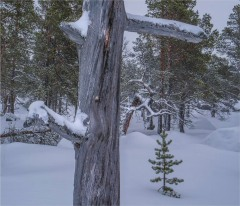 Stora-Sjofalletts-NP-06032019-Snowfall-SWE848