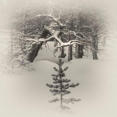 Stora-Sjofalletts-NP-06032019-Snowfall-SWE851ST