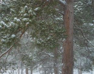 Stora-Sjofalletts-NP-06032019-Snowfall-SWE854