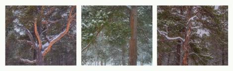 Stora-Sjofalletts-Triptych-001