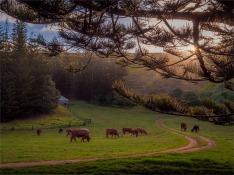 Arthurs-Vale-160919-Norfolk-Island-046