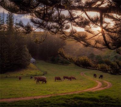 Arthurs-Vale-Dusk-160919-Norfolk-Island-046