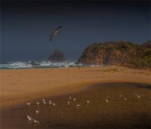 Narooma-Coastal-061019-NSW-0813