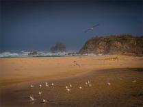 Narooma-Coastal-061019-NSW-085 copy