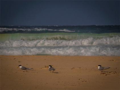 Narooma-Coastal-061019-NSW-089
