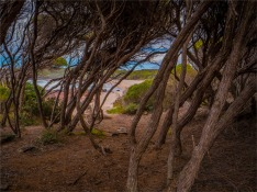 Saltwater-Creek-101019-NSW-025