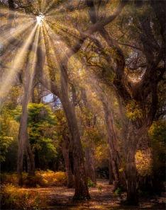 Saltwater-Creek-101019-NSW-0SR33