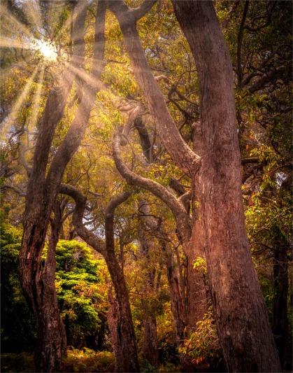 Saltwater-Creek-101019-NSW-0SR35