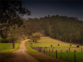 Tuross-River-Road-071019-NSW-135