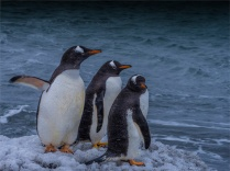 Brown-Bluff-11282019-Antarctic-Peninsular-0918