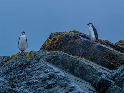Elephant-Island-11272019-Antarctic-Peninsular-080