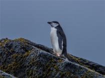 Elephant-Island-11272019-Antarctic-Peninsular-274
