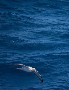 Ocean-Wanderers-19112019-Antarctic-Peninsular-001