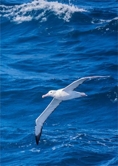 Ocean-Wanderers-19112019-Antarctic-Peninsular-007