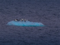 Paulet-Island-11272019-Antarctic-Peninsular-001