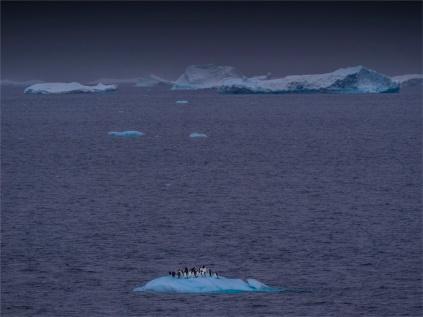 Paulet-Island-11272019-Antarctic-Peninsular-011