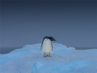 Paulet-Island-11272019-Antarctic-Peninsular-130