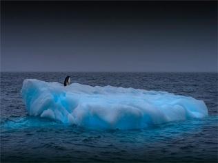 Paulet-Island-11272019-Antarctic-Peninsular-143