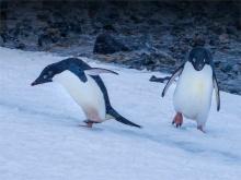 Paulet-Island-11272019-Antarctic-Peninsular-174