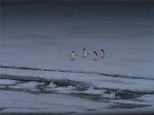 Paulet-Island-11272019-Antarctic-Peninsular-191