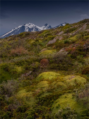Ushuaia-Beagle-Channel-17112019-Argentina-177