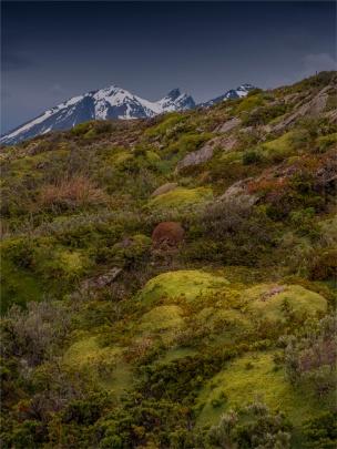 Ushuaia-Beagle-Channel-17112019-Argentina-177