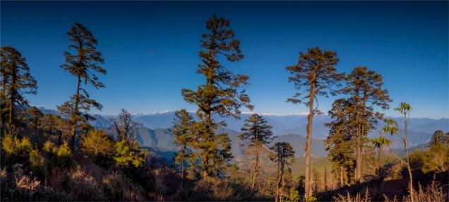 Dochula-Pass-12062019-Bhutan-0002-Panorama