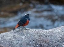 Trongsa-12112019-Bhutan-0573