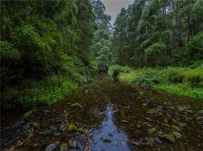 Barham-River-Paradise-2020-February-VIC-0853