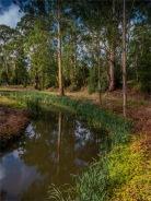 Barwon-River-02042020-Forrest-VIC-0004