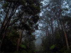 Otway-Ranges-Mist-2020-February-VIC-0027