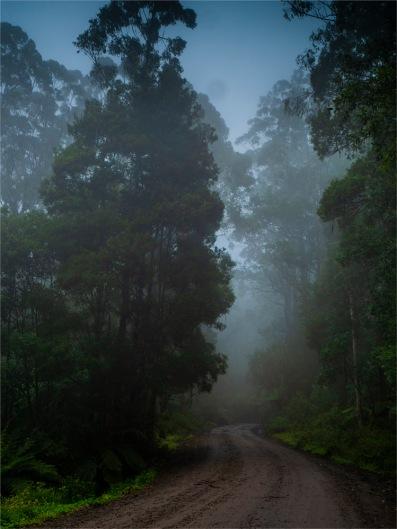 Otway-Ranges-Mist-2020-February-VIC-06014