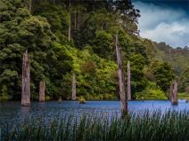 Otway-Ranges-NP-02032020-Lake-Elizabeth-VIC-0010