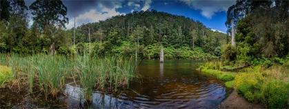 Otway-Ranges-NP-02032020-Lake-Elizabeth-VIC-0015-Panorama