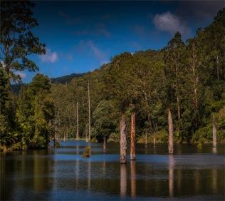 Otway-Ranges-NP-02032020-Lake-Elizabeth-VIC-00513