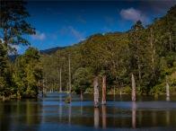 Otway-Ranges-NP-02032020-Lake-Elizabeth-VIC-0053