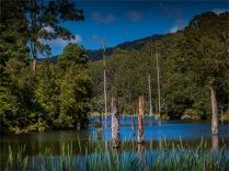 Otway-Ranges-NP-02032020-Lake-Elizabeth-VIC-0057