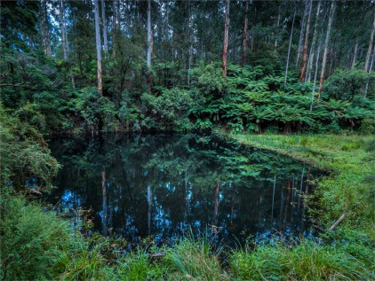 Otway-Ranges-NP-02032020-Lake-Elizabeth-VIC-0073