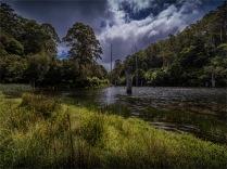 Otway-Ranges-NP-02032020-Lake-Elizabeth-VIC-0115