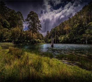 Otway-Ranges-NP-02032020-Lake-Elizabeth-VIC-01815